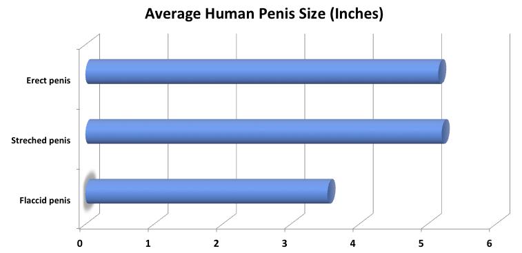 pénisz mérete két év alatt