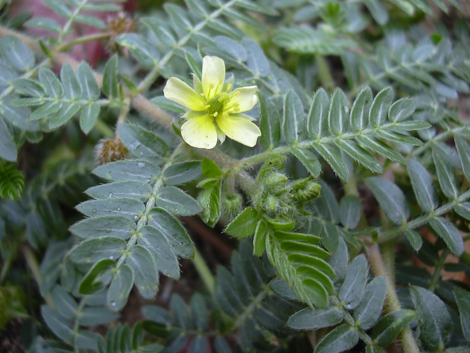 13 vágyfokozó növény - afrodiziákumot a zöldségestől