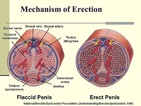 hogyan fázhat meg a pénisz