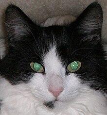 Macska – Wikipédia