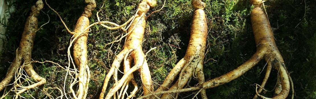 az erekciós gyógynövények javítása)