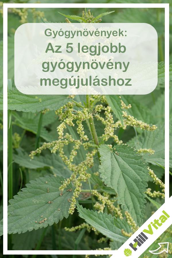 A csípős csalán jól ismert gyógynövény, nemi serkentőszer és ehető étel