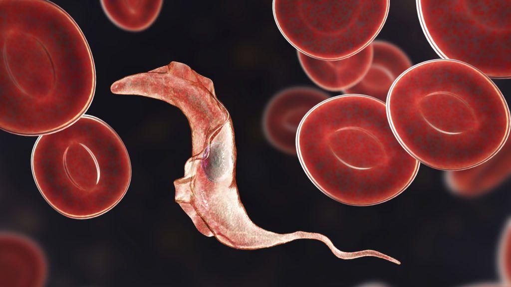 DURVA: Péniszén keresztül mászott a férfi testébe a parazita | Brutál +18