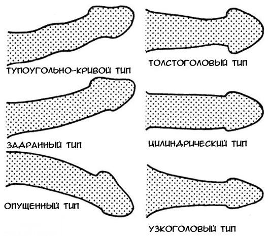 hogyan lehet növelni a pénisz tagjainak vastagságát