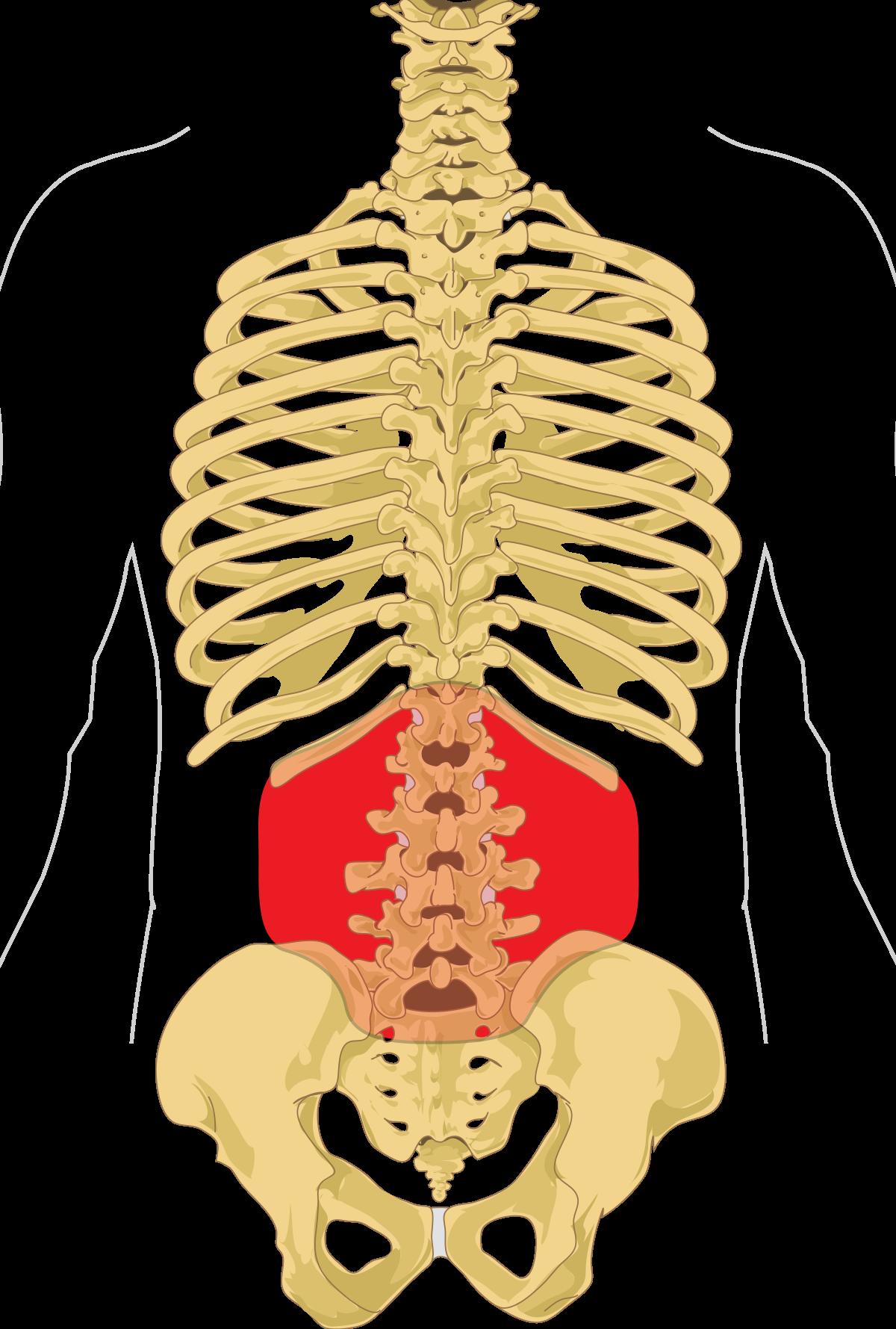 erekció után jelentkező fájdalom a has alsó részén