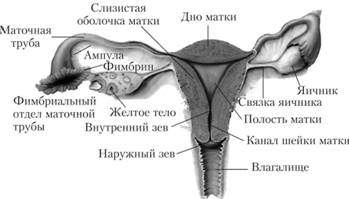 hosszabbítóval a péniszen