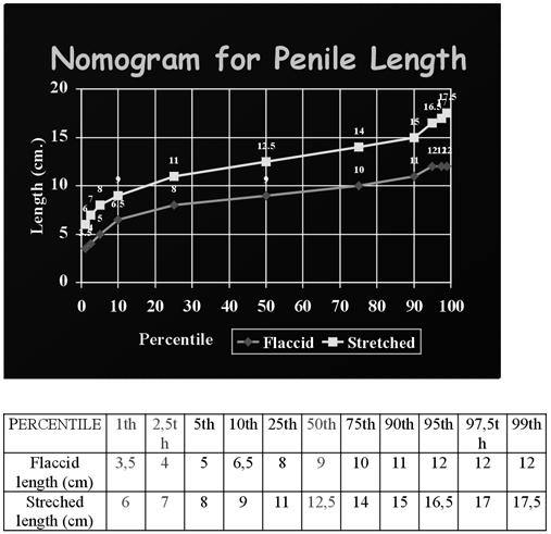 pénisz erekció ívelt
