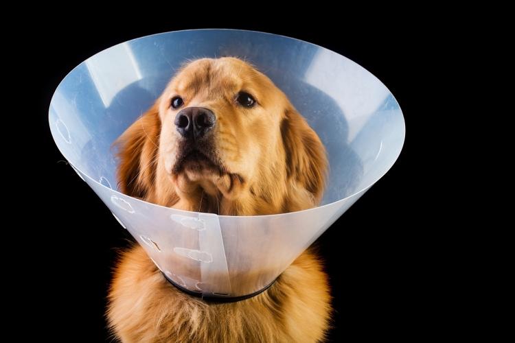 Kellemetlen állapot: vizeletcsepegés kutyáknál - Egészség