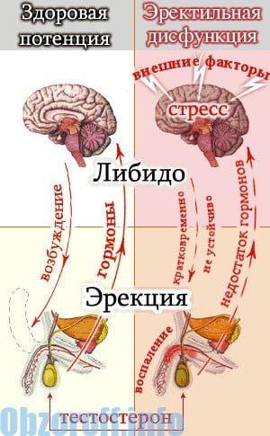 az erekció helyreállítását szolgáló gyakorlatok)