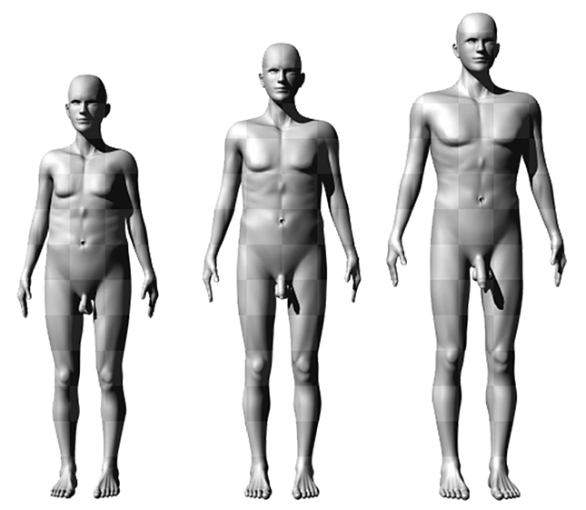 a pénisz növekedési szakasza milyen vitaminokra van szükség a pénisz növekedéséhez