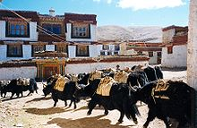 pénisz jak tibet)