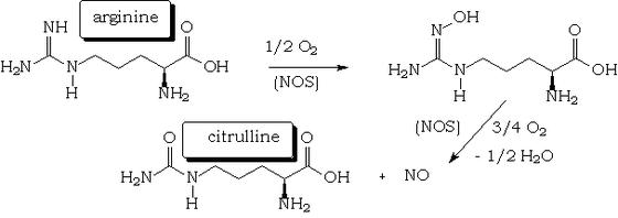 nitrogén-monoxid-erekció)