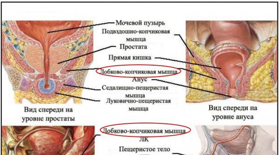 az erekciót emelő gyógynövények