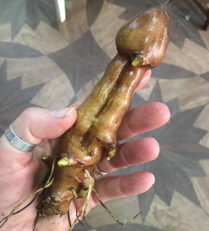 mesék a péniszről